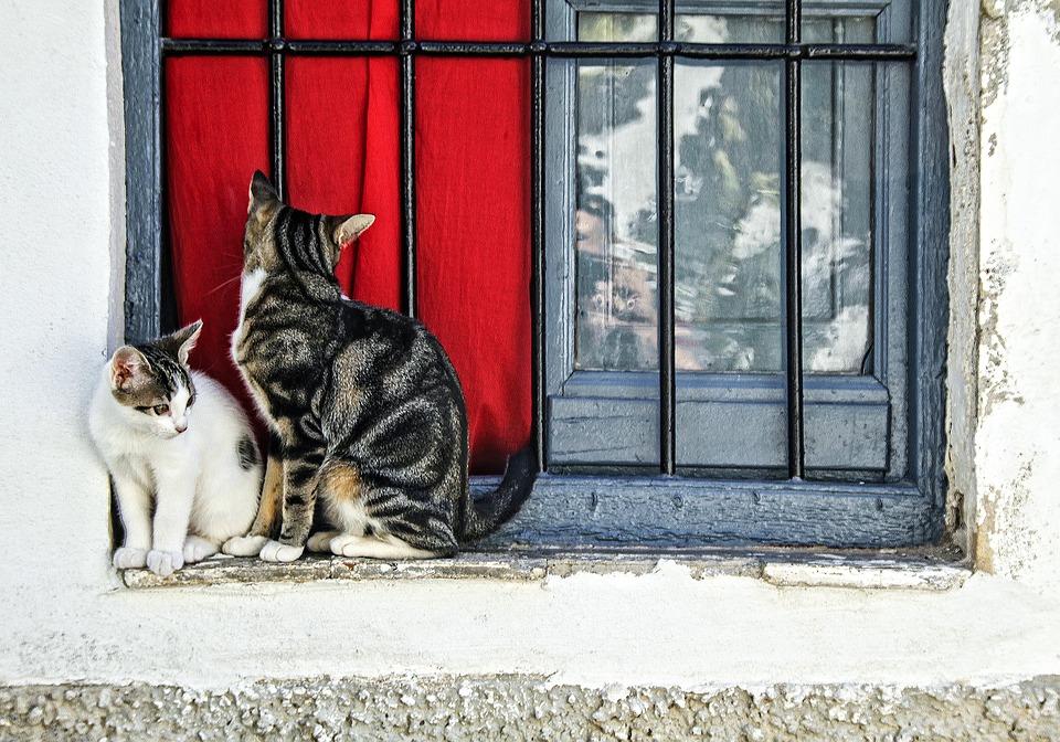 ネコ 仲良し