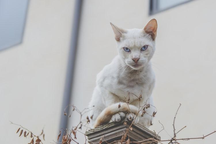 ネコ 冷たい目