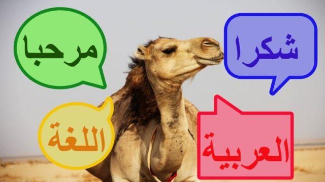 ラクダがアラビア語を話す